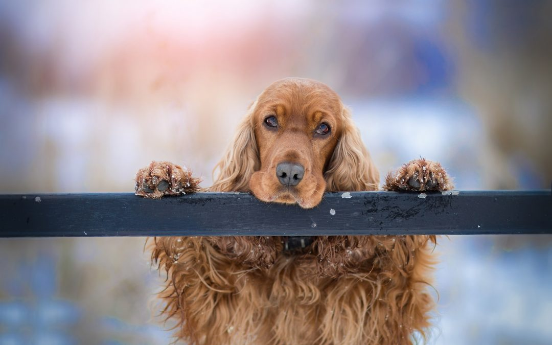 Training Your Dog to Deal With Separation Anxiety